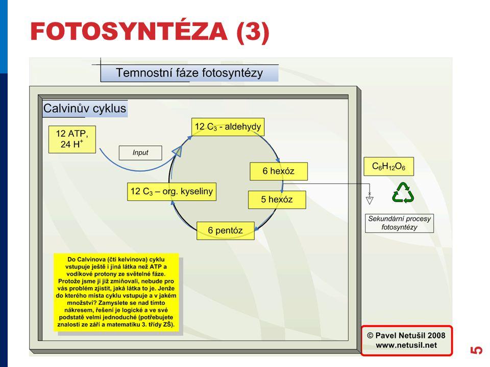 fotosyntéza (3)