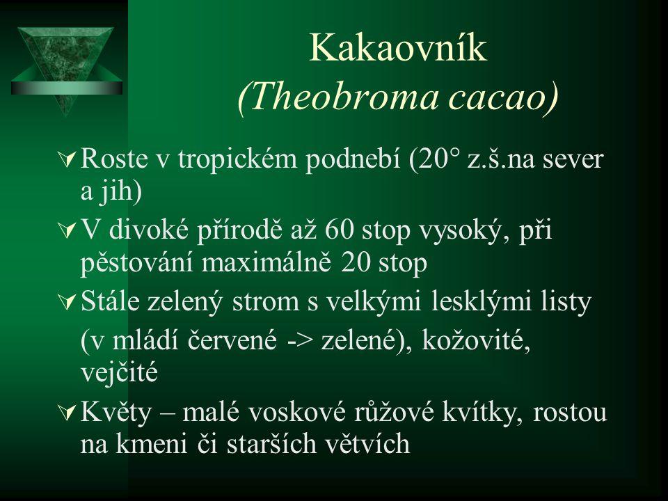 Kakaovník (Theobroma cacao)