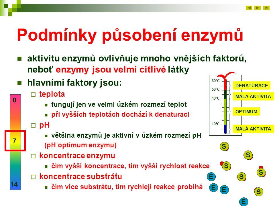 Podmínky působení enzymů