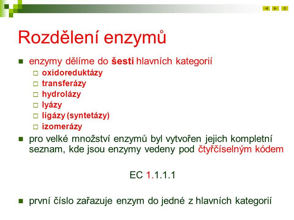 Rozdělení enzymů enzymy dělíme do šesti hlavních kategorií