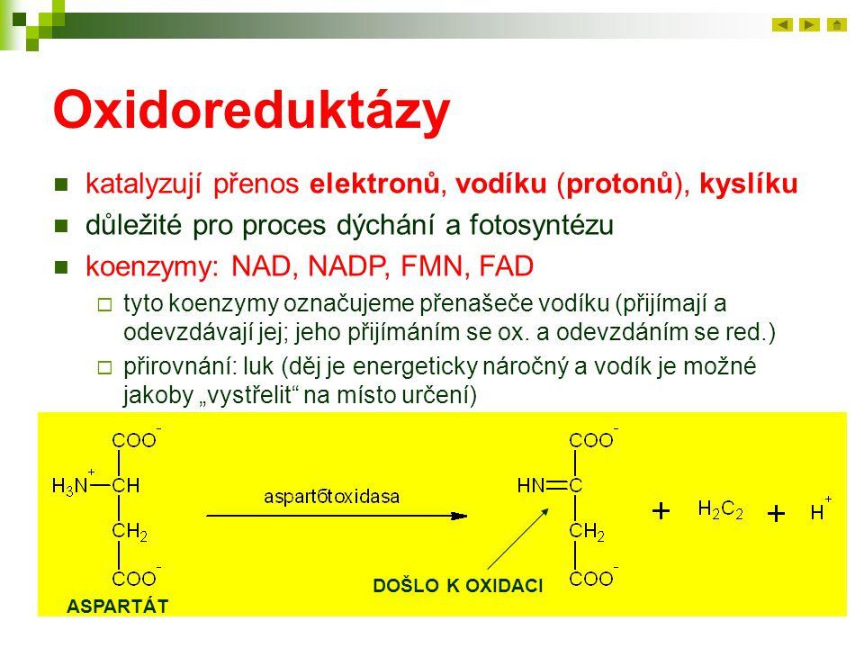 Oxidoreduktázy katalyzují přenos elektronů, vodíku (protonů), kyslíku
