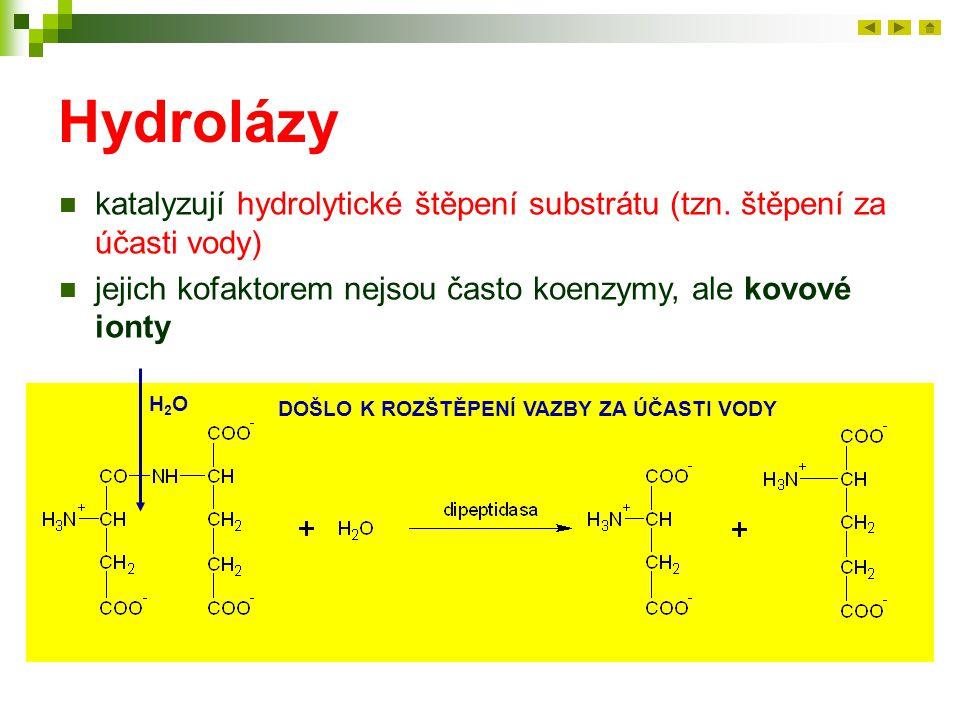 Hydrolázy katalyzují hydrolytické štěpení substrátu (tzn. štěpení za účasti vody) jejich kofaktorem nejsou často koenzymy, ale kovové ionty.
