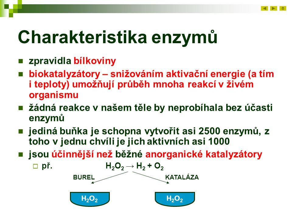 Charakteristika enzymů