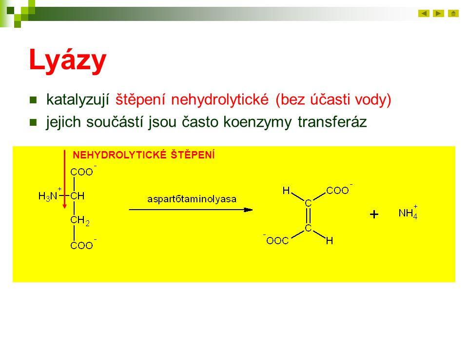 Lyázy katalyzují štěpení nehydrolytické (bez účasti vody)