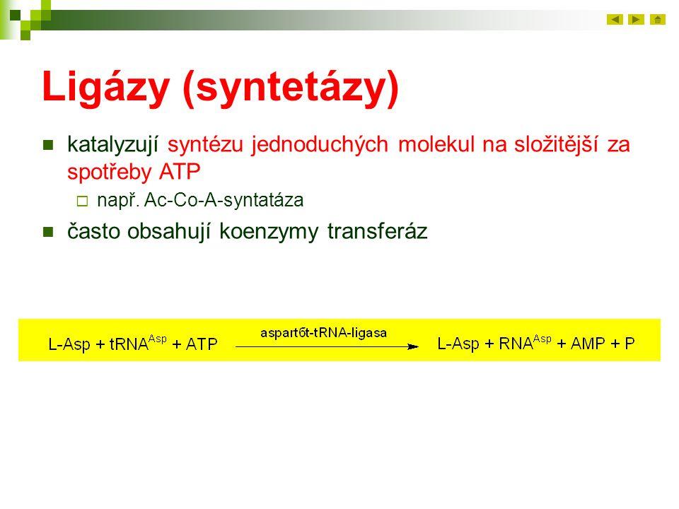 Ligázy (syntetázy) katalyzují syntézu jednoduchých molekul na složitější za spotřeby ATP. např. Ac-Co-A-syntatáza.