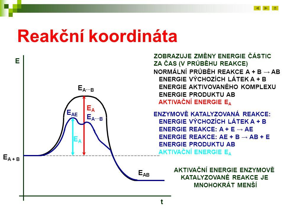 AKTIVAČNÍ ENERGIE ENZYMOVĚ KATALYZOVANÉ REAKCE JE