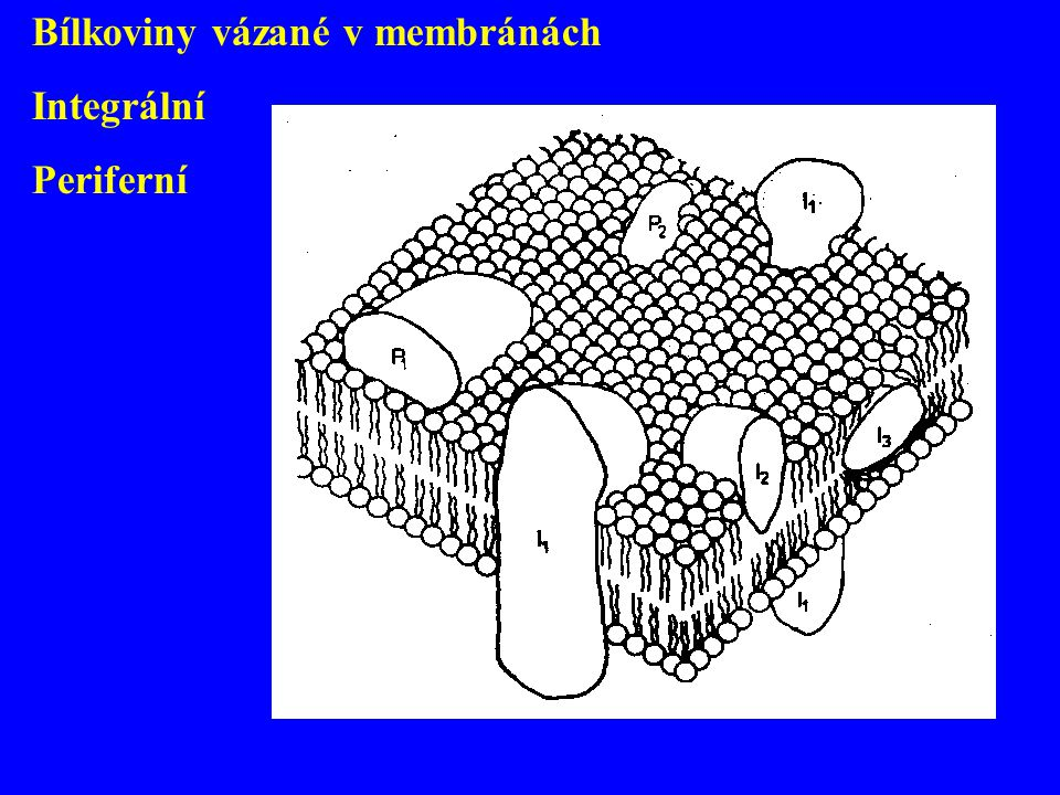 Bílkoviny vázané v membránách