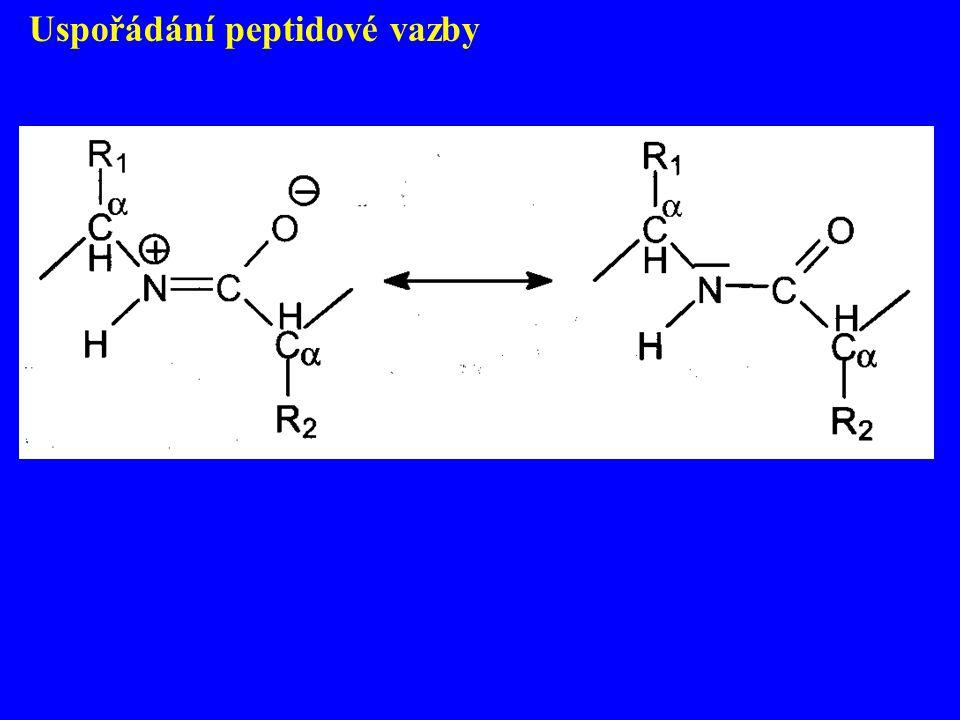 Uspořádání peptidové vazby