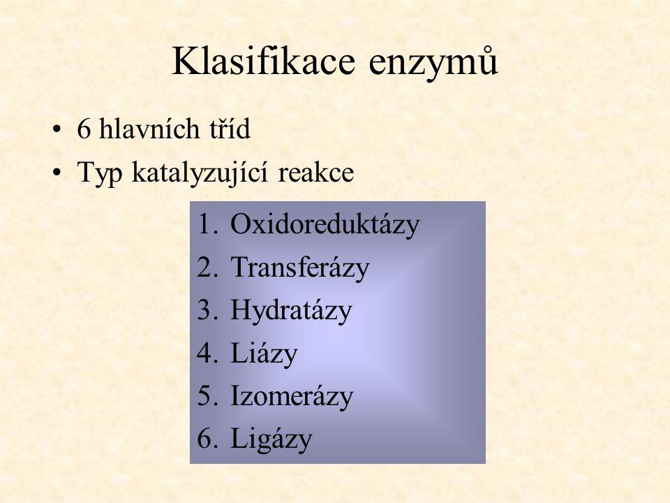 Klasifikace enzymů 6 hlavních tříd Typ katalyzující reakce