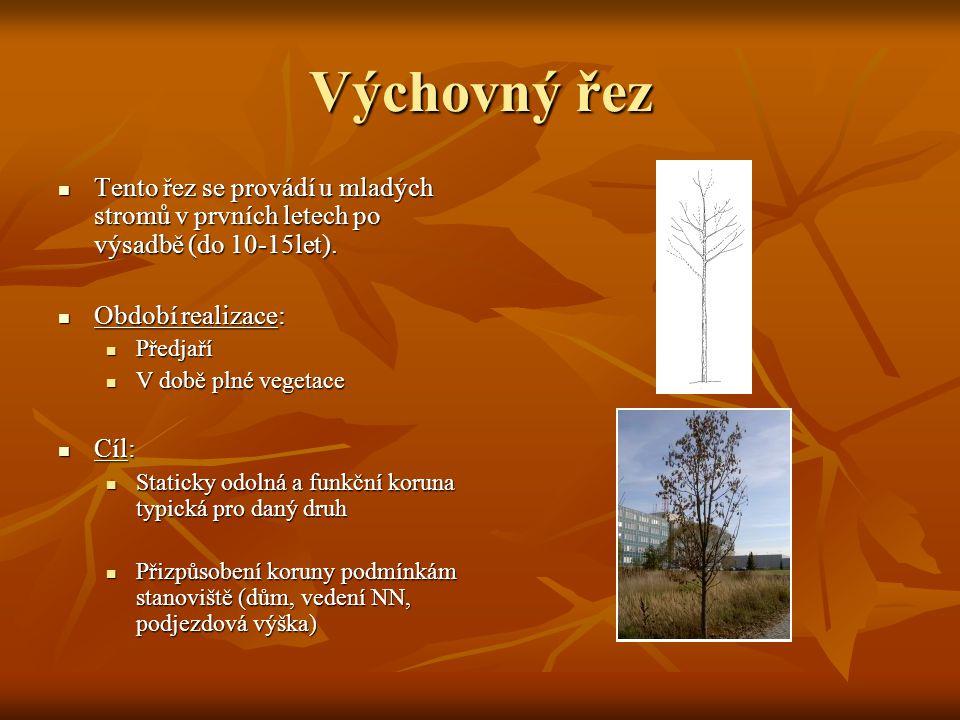 Výchovný řez Tento řez se provádí u mladých stromů v prvních letech po výsadbě (do 10-15let). Období realizace:
