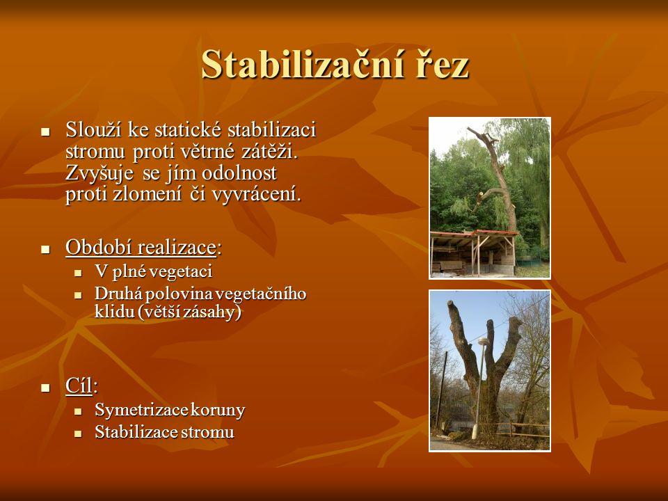 Stabilizační řez Slouží ke statické stabilizaci stromu proti větrné zátěži. Zvyšuje se jím odolnost proti zlomení či vyvrácení.
