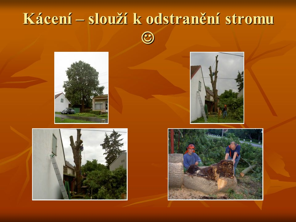 Kácení – slouží k odstranění stromu 