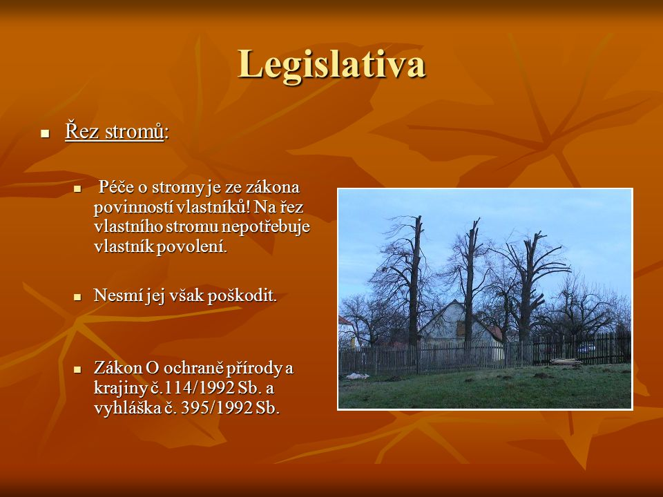 Legislativa Řez stromů: