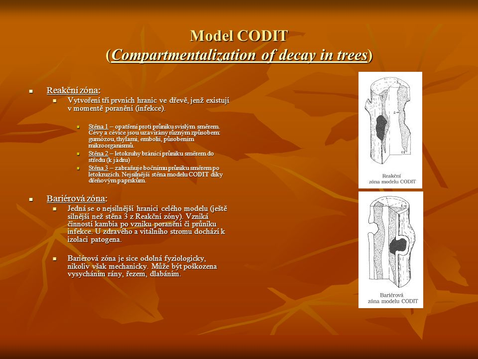 Model CODIT (Compartmentalization of decay in trees)