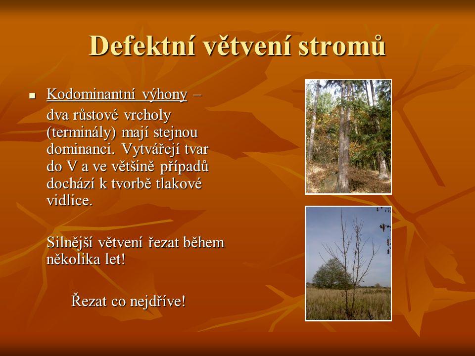 Defektní větvení stromů
