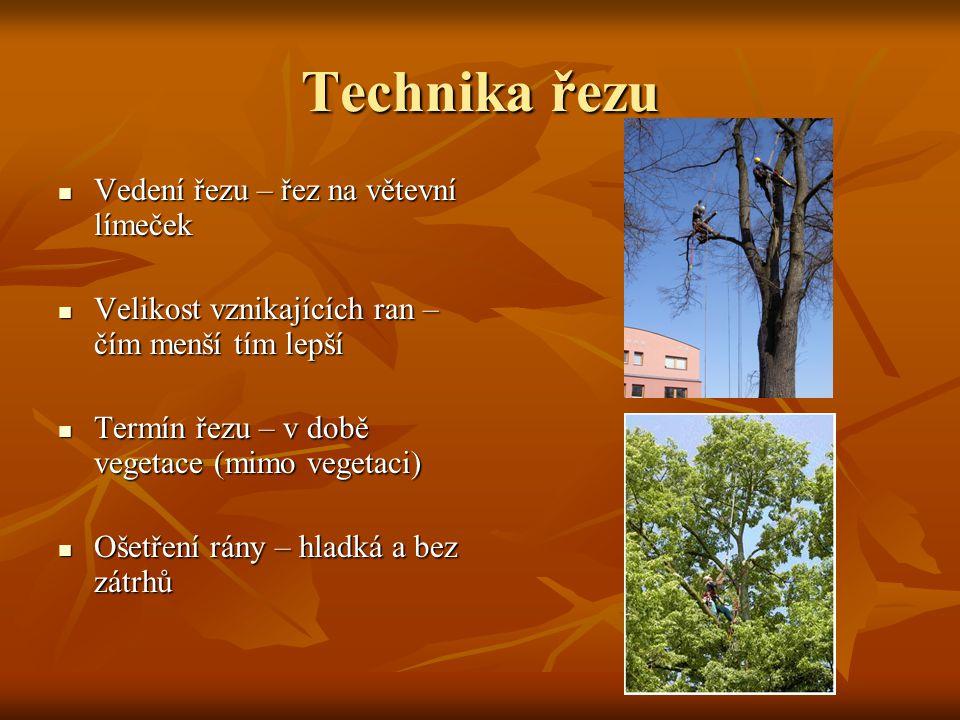 Technika řezu Vedení řezu – řez na větevní límeček