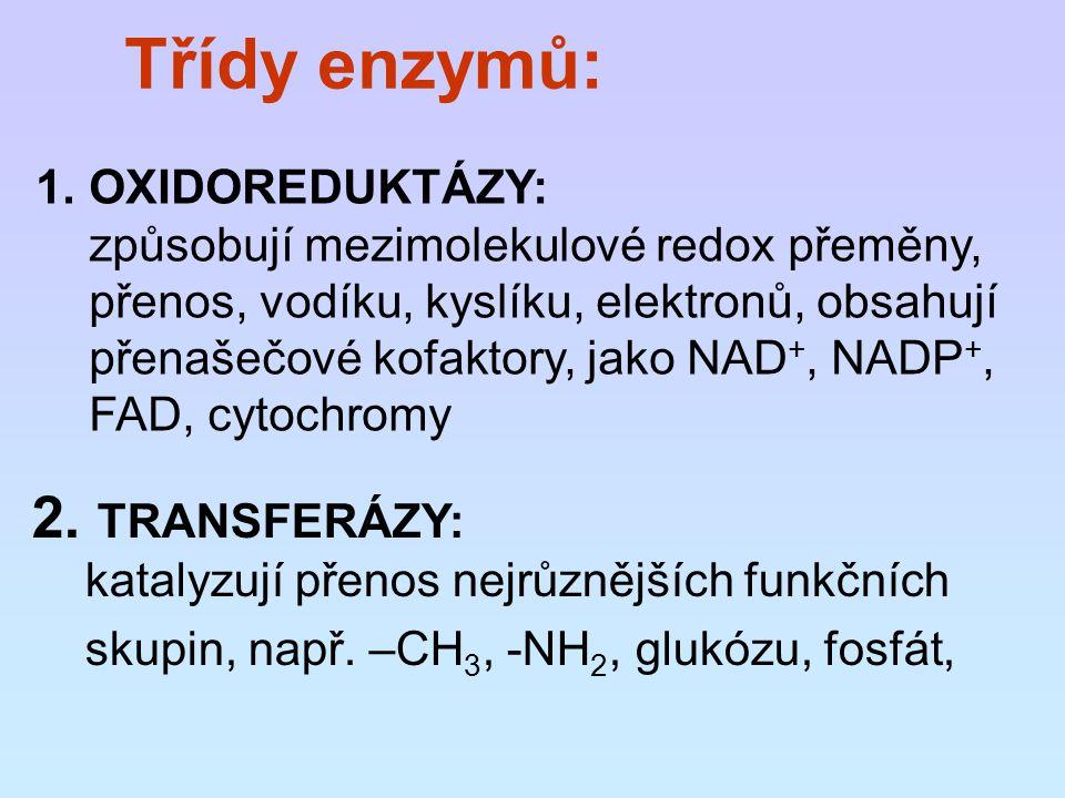 Třídy enzymů: 2. TRANSFERÁZY: OXIDOREDUKTÁZY: