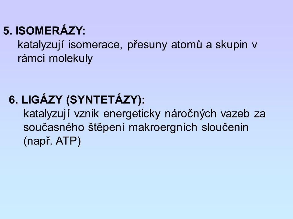 5. ISOMERÁZY: katalyzují isomerace, přesuny atomů a skupin v rámci molekuly. 6. LIGÁZY (SYNTETÁZY):