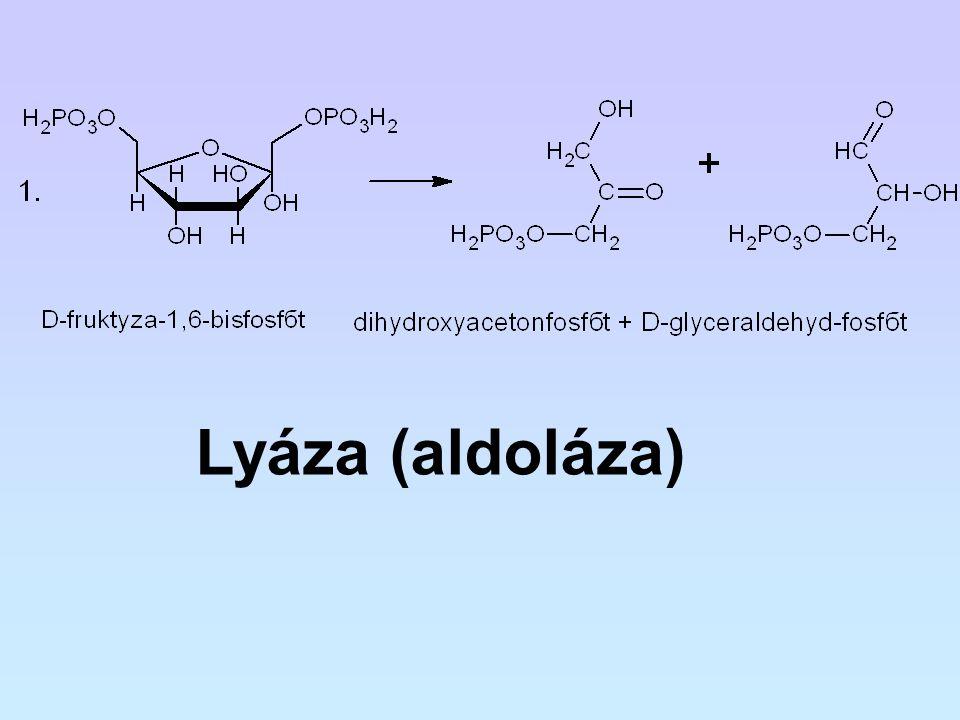 Lyáza (aldoláza)