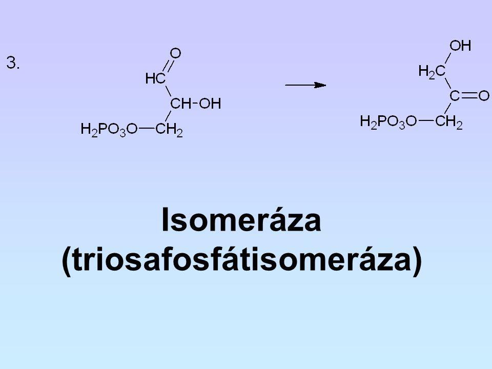 (triosafosfátisomeráza)