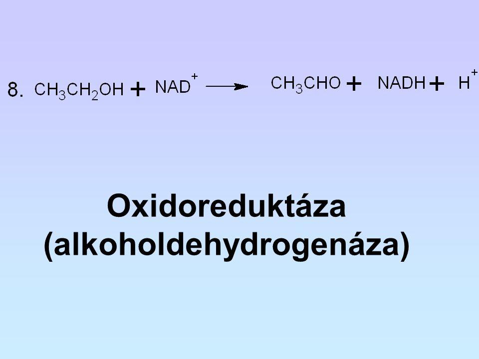 (alkoholdehydrogenáza)
