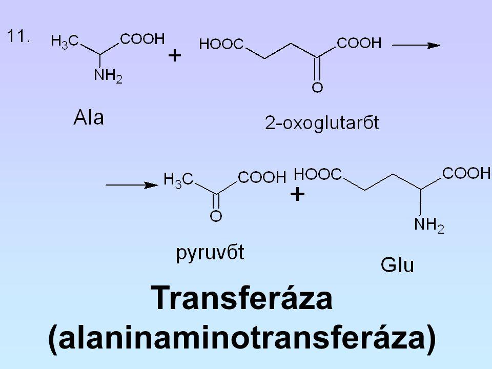 (alaninaminotransferáza)