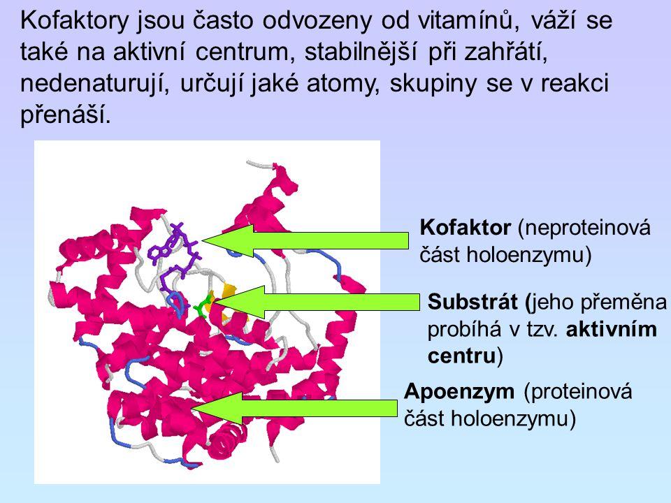 Kofaktory jsou často odvozeny od vitamínů, váží se také na aktivní centrum, stabilnější při zahřátí, nedenaturují, určují jaké atomy, skupiny se v reakci přenáší.