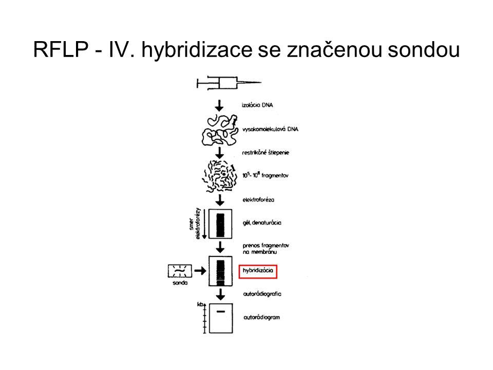 RFLP - IV. hybridizace se značenou sondou