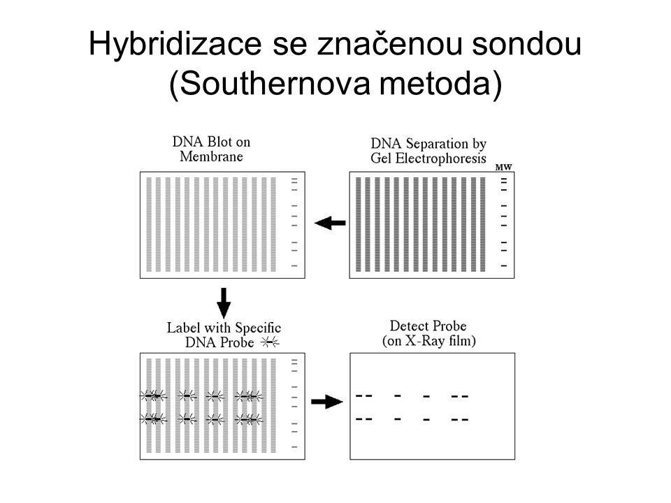 Hybridizace se značenou sondou (Southernova metoda)