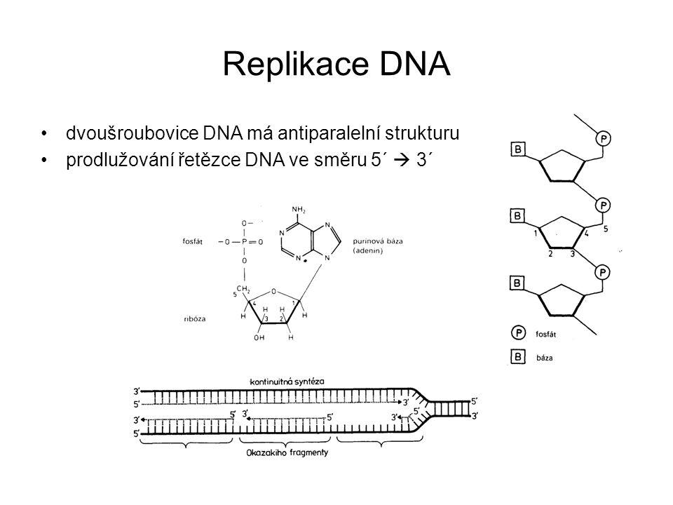 Replikace DNA dvoušroubovice DNA má antiparalelní strukturu