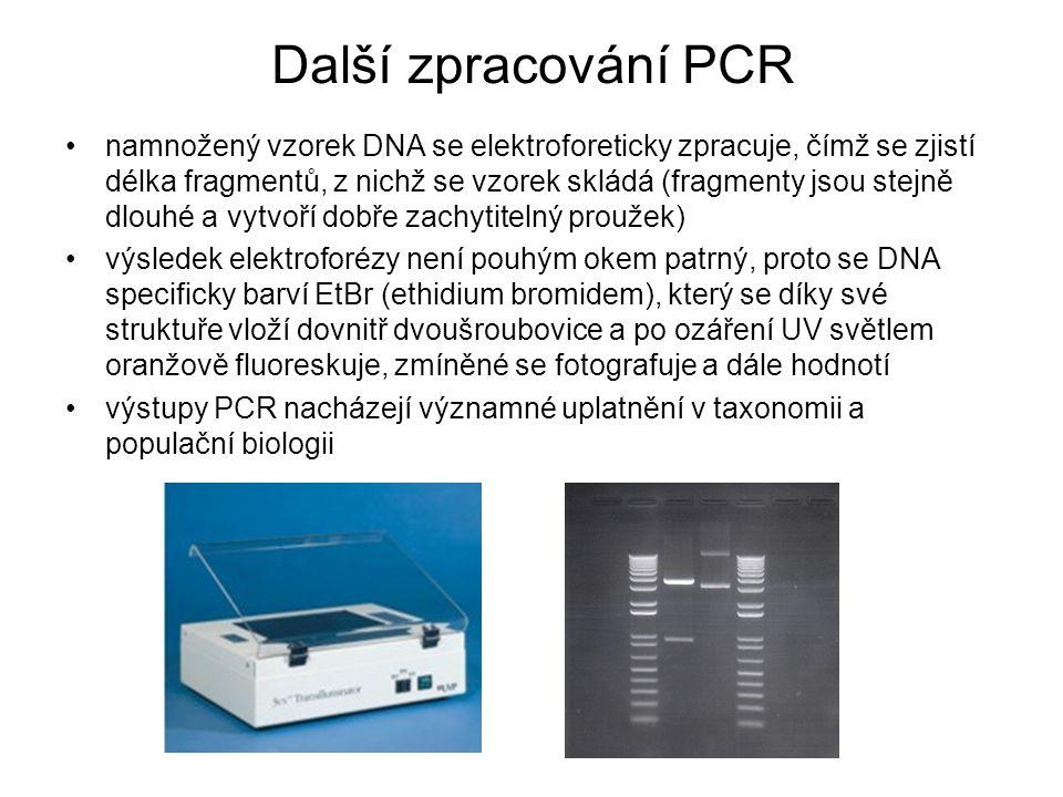 Další zpracování PCR