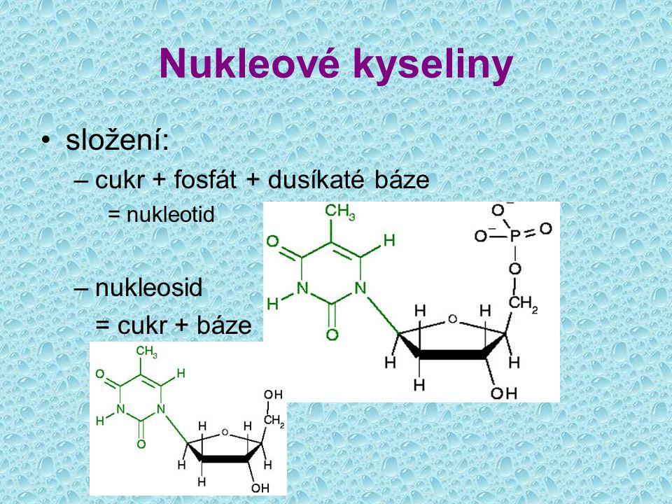 Nukleové kyseliny složení: cukr + fosfát + dusíkaté báze nukleosid