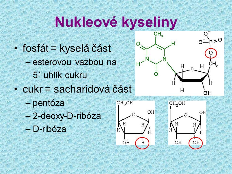 Nukleové kyseliny fosfát = kyselá část cukr = sacharidová část