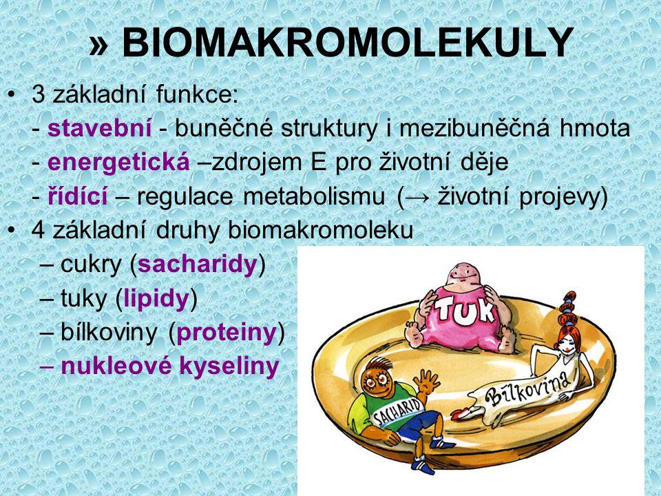 » BIOMAKROMOLEKULY 3 základní funkce: