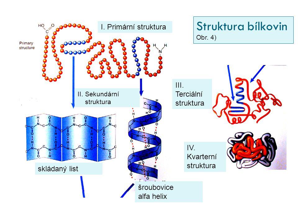 Struktura bílkovin I. Primární struktura III. Terciální struktura