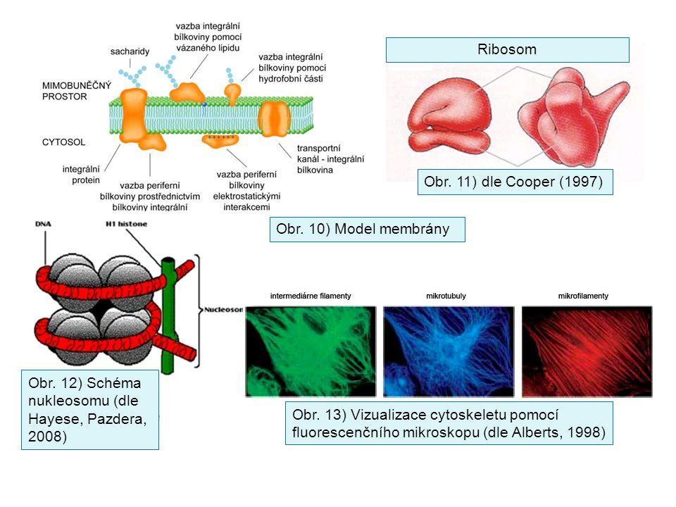 Ribosom Obr. 11) dle Cooper (1997) Obr. 10) Model membrány. Obr. 12) Schéma nukleosomu (dle Hayese, Pazdera, 2008)