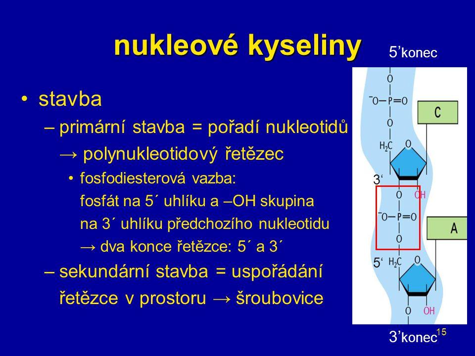 nukleové kyseliny stavba primární stavba = pořadí nukleotidů v řetězci