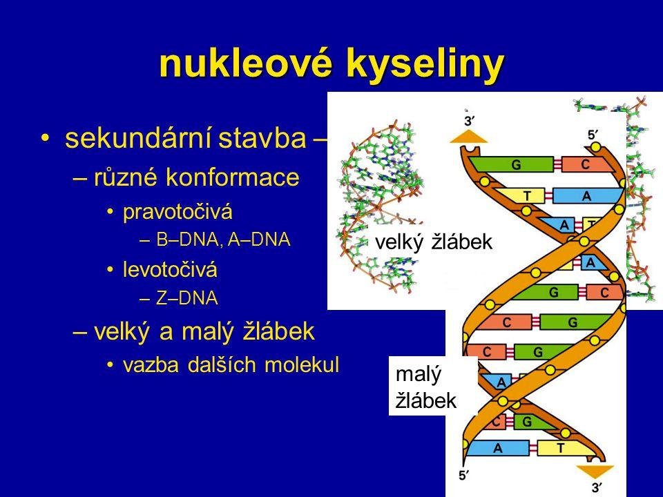 nukleové kyseliny sekundární stavba – DNA různé konformace