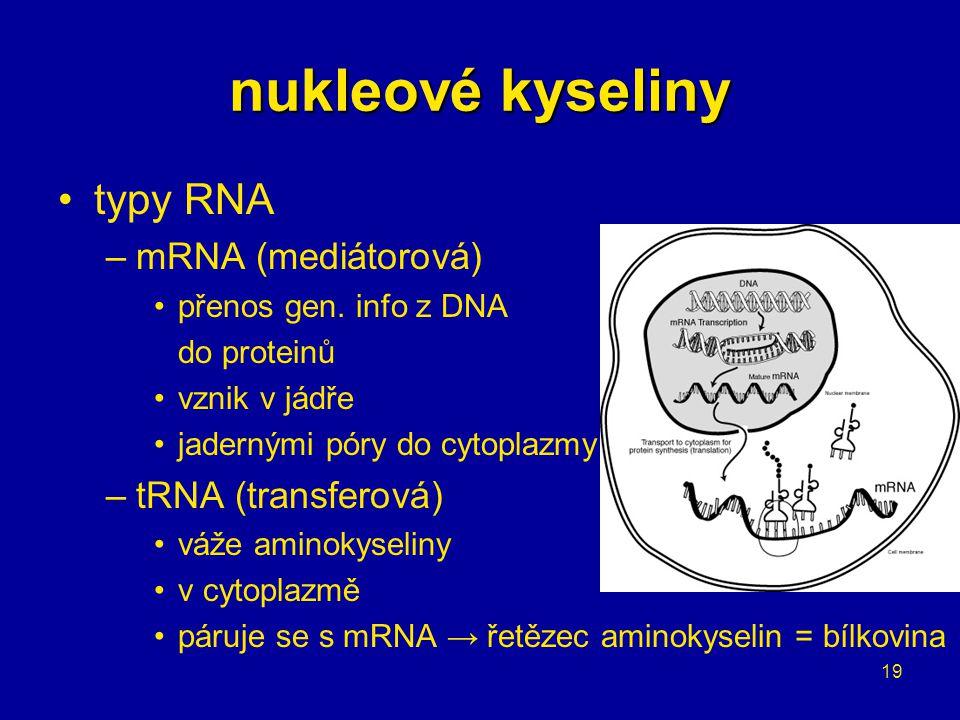 nukleové kyseliny typy RNA mRNA (mediátorová) tRNA (transferová)