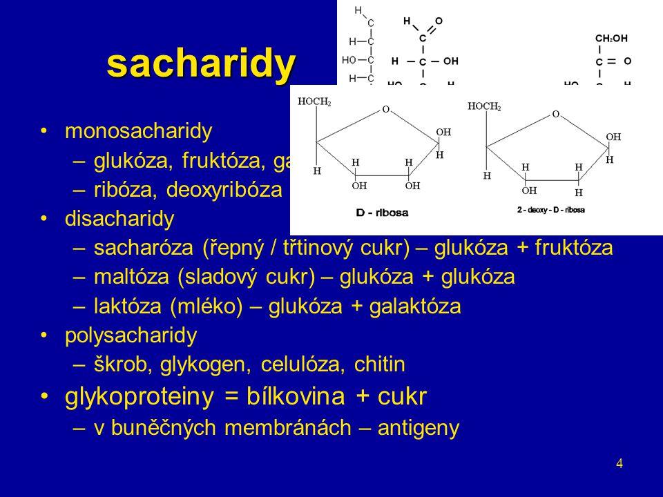 sacharidy glykoproteiny = bílkovina + cukr monosacharidy