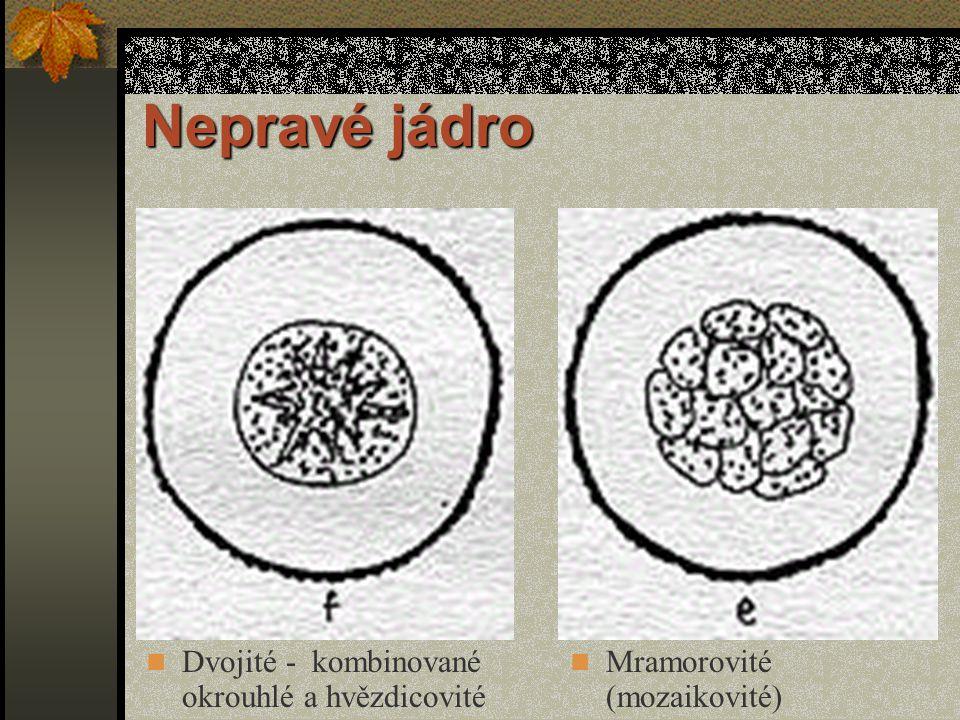 Nepravé jádro Dvojité - kombinované okrouhlé a hvězdicovité