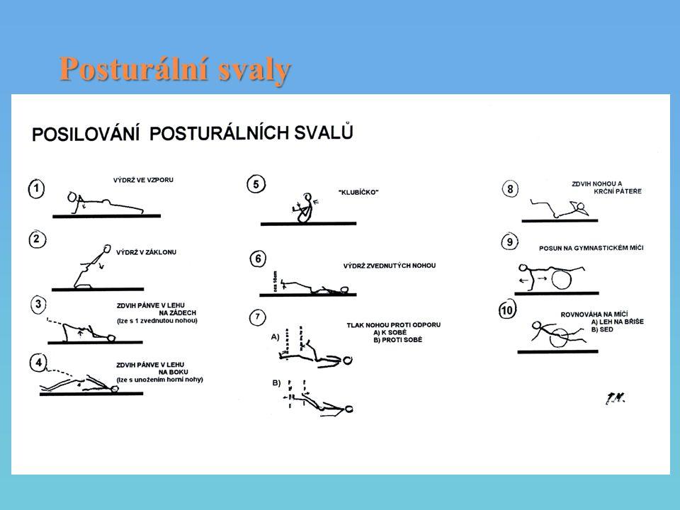 Posturální svaly
