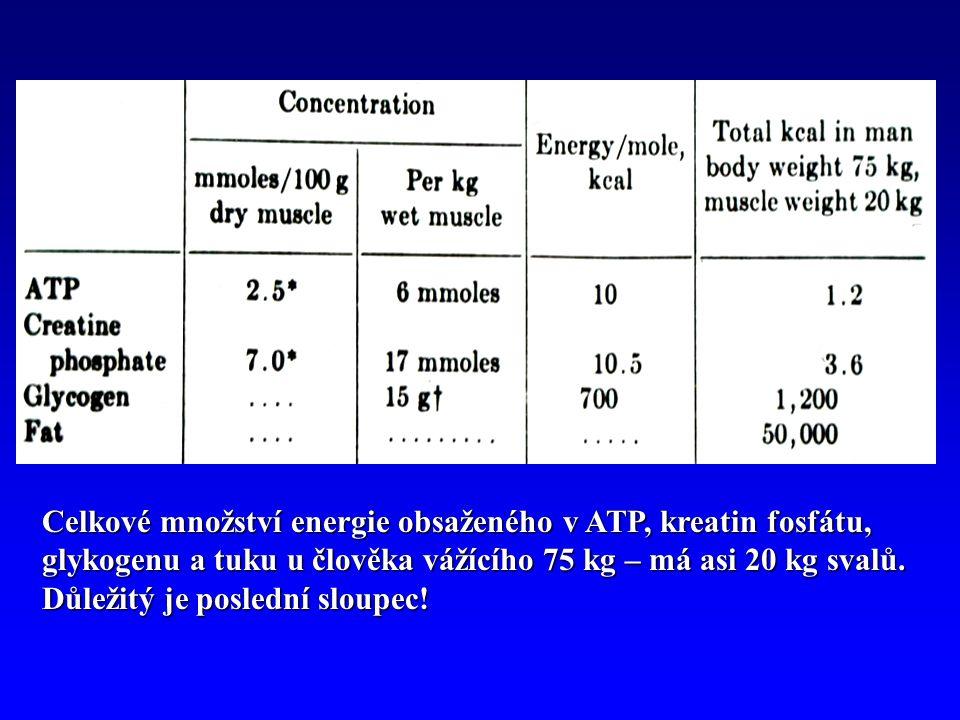 Celkové množství energie obsaženého v ATP, kreatin fosfátu, glykogenu a tuku u člověka vážícího 75 kg – má asi 20 kg svalů.