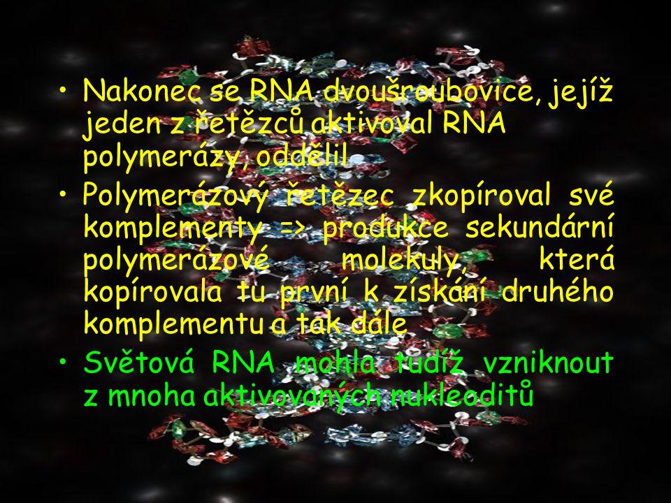 Nakonec se RNA dvoušroubovice, jejíž jeden z řetězců aktivoval RNA polymerázy, oddělil