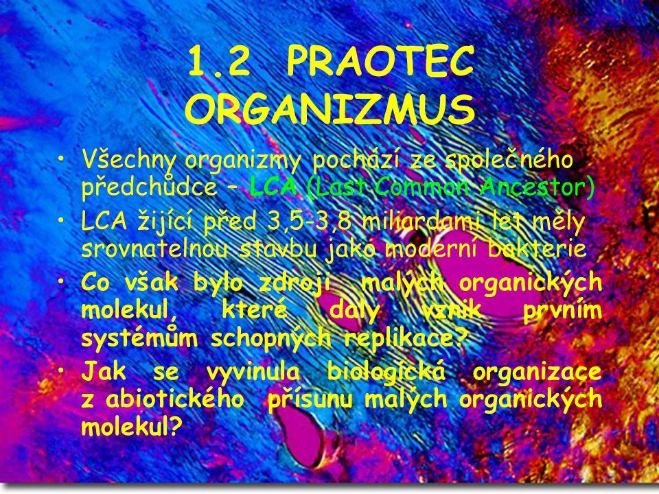 1.2 PRAOTEC ORGANIZMUS Všechny organizmy pochází ze společného předchůdce – LCA (Last Common Ancestor)