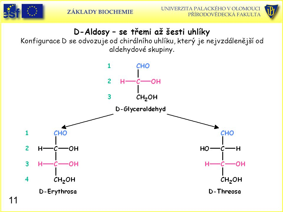 D-Aldosy – se třemi až šesti uhlíky Konfigurace D se odvozuje od chirálního uhlíku, který je nejvzdálenější od aldehydové skupiny.