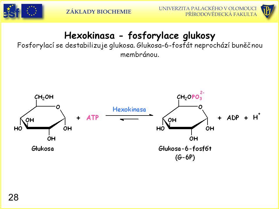 Hexokinasa - fosforylace glukosy Fosforylací se destabilizuje glukosa