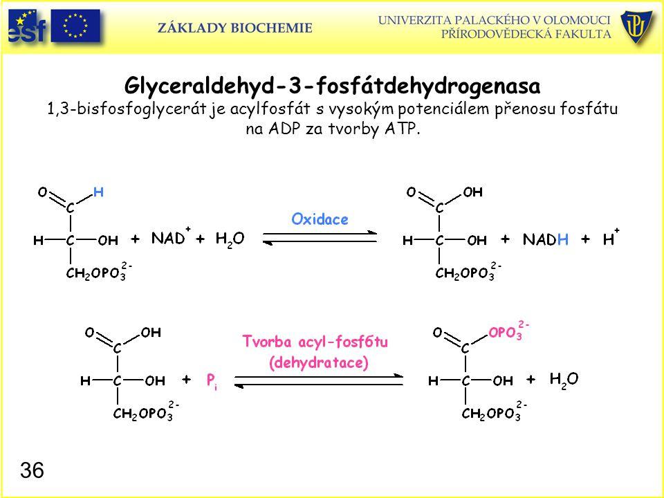 Glyceraldehyd-3-fosfátdehydrogenasa 1,3-bisfosfoglycerát je acylfosfát s vysokým potenciálem přenosu fosfátu na ADP za tvorby ATP.