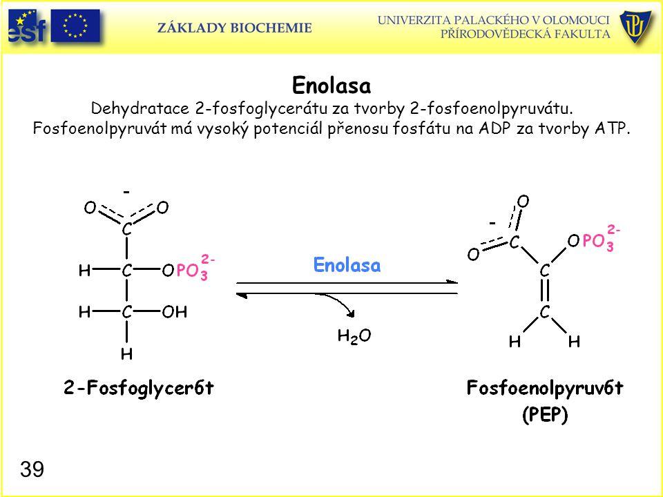Enolasa Dehydratace 2-fosfoglycerátu za tvorby 2-fosfoenolpyruvátu