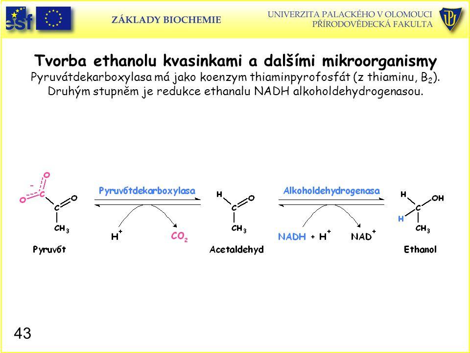 Tvorba ethanolu kvasinkami a dalšími mikroorganismy Pyruvátdekarboxylasa má jako koenzym thiaminpyrofosfát (z thiaminu, B2). Druhým stupněm je redukce ethanalu NADH alkoholdehydrogenasou.